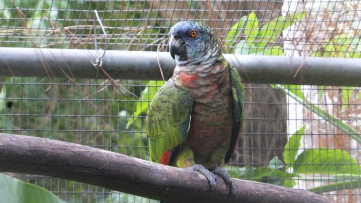 170731-parrot.jpg