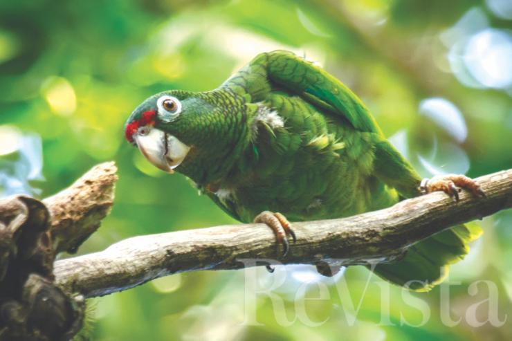 54.climate.parrots.jpg